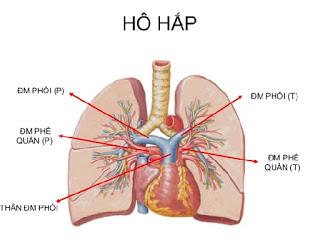 Nghe phổi và phát hiện triệu chứng
