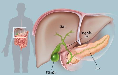 Triệu chứng và điều trị viêm gan mạn tính