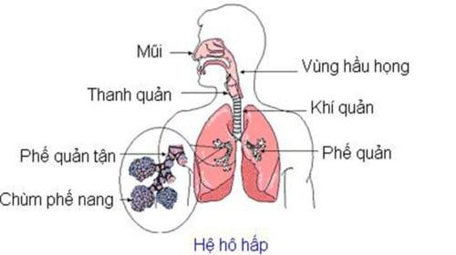Video Giải phẫu và sinh lý học về hệ hô hấp