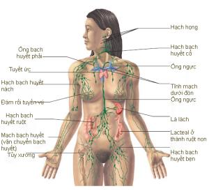Video Sinh lý hệ bạch huyết