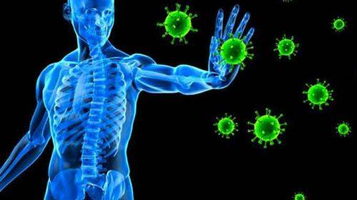 Sự thật thú vị về hệ thống miễn dịch